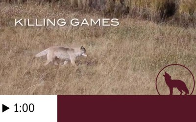 KILLING GAMES: Wildlife In The Crosshairs TRAILER (60 seconds)