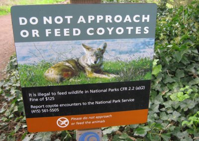 Fear and coyotes in San Francisco
