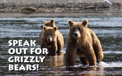 ACTION ALERT: SPEAK OUT FOR GRIZZLY BEARS