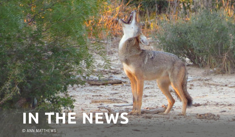 Another View — Christine Schadler: The ugly sides of coyote hunting