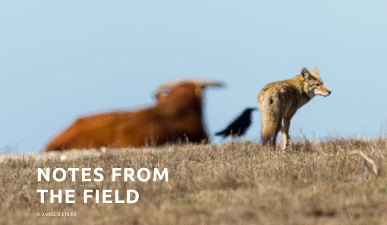 Interview With Wildlife Photographer Daniel Dietrich