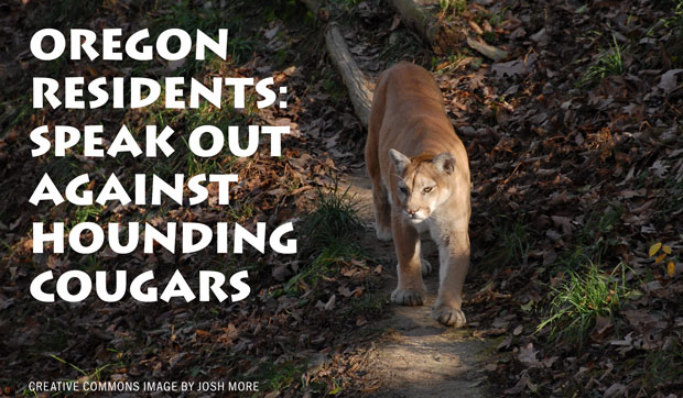 Oregon Residents: Speak out Against Hounding Cougars