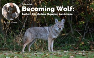 Sunapee, NH: Becoming Wolf @ Lake Sunapee Protection Association | Sunapee | New Hampshire | United States