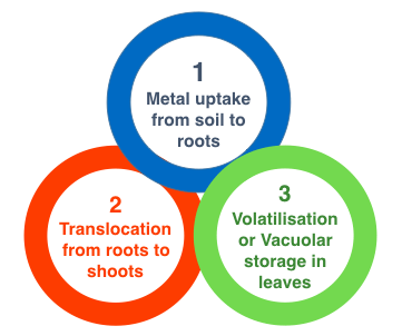 General steps in Phytoremediation of metal bioremediation