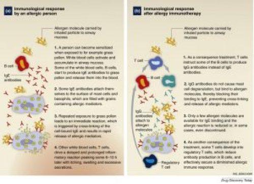 Image 6: Immunologic response to allergen immunotherapy(Larsen, Broge, & Jacobi, 2016)