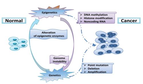 Genetic and epigenetic modifications causing colorectal cancer (Chen et al., 2013)
