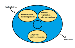 Three types of interdependent microorganisms cooperating in fuel degradation and electron transfer to the electrode (Rinaldi et al. 2008)