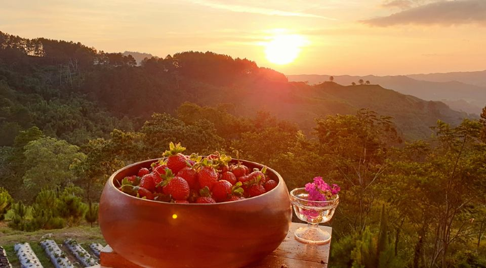 Taglucop-Strawberry-Hill-