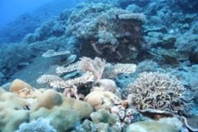coral reef of palau