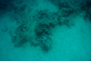 coral head in palau