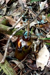 old medicinal bottle filled with goo in the jungles of palau