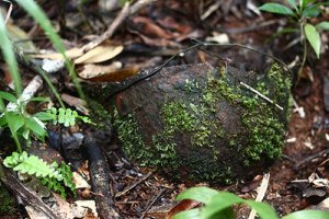 wwii japanese helmet palau islands bentprop.org