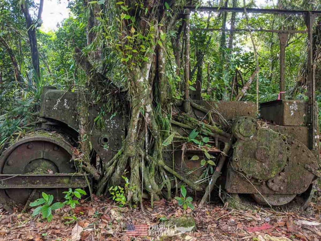 palau wwii military vehicle with ingrown tree