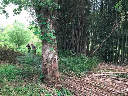 He called his friend and they spent the day cutting down more and more cane.
