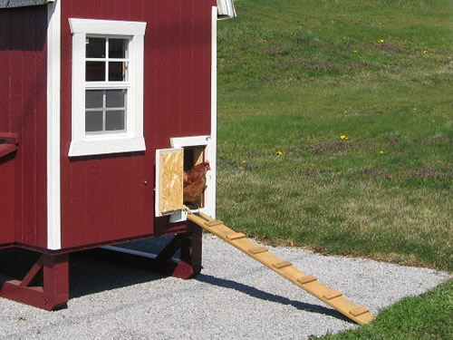 The chicken door can be latched from the side or from the bottom.
