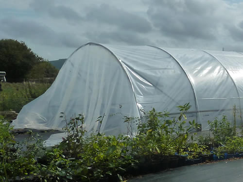 Polytunnel, Small Dole, England Photo by Steve Law, Brighton Plants Author of the four volumes or Fruition