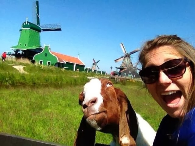 funny-animal-selfie-013