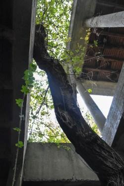 Natuur overwoekert spookhotel Mechelen