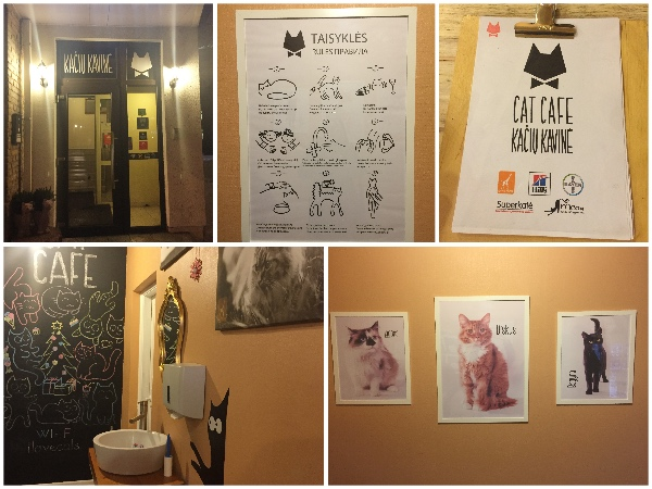 Cat Café Vilnius