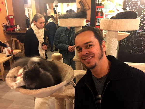 Gatos no Cat Cafe