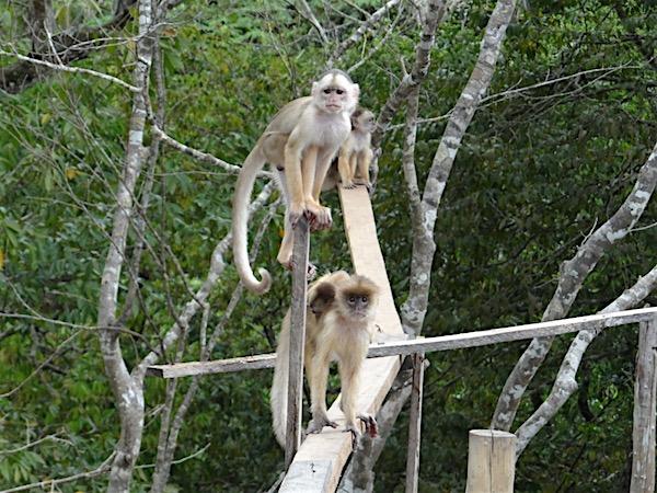 Fauna da Amazônia
