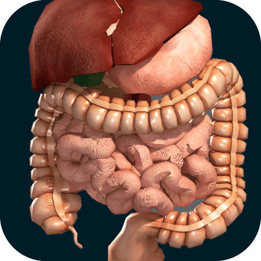 Application organes internes en 3D