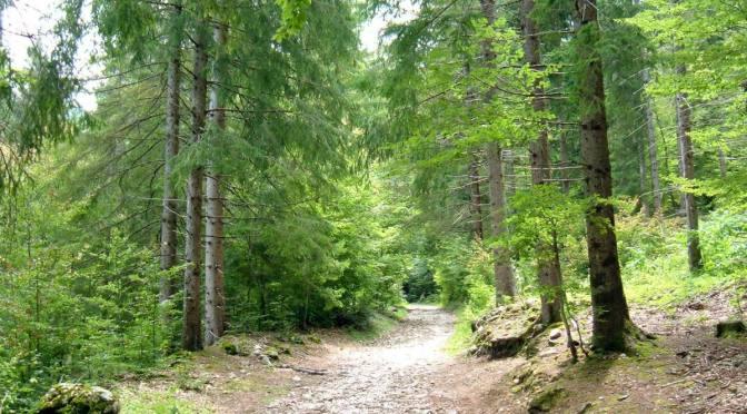 Il bello di camminare nei boschi