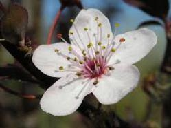 la fleur de la maîtrise des émotions