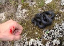 serpent leçon de vie