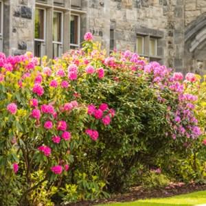 blooming shrubs for spring