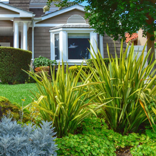 bring tropicals to your landscape