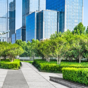 commercial landscape all year long
