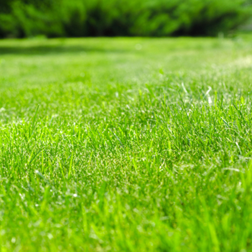 i want my grass to be green again