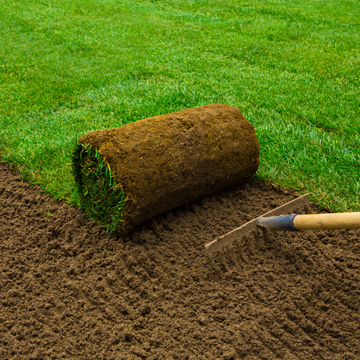 installing sod this summer