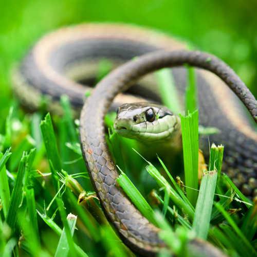 keeping snakes away