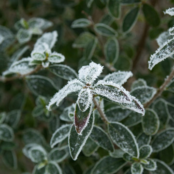 protect plants for winter