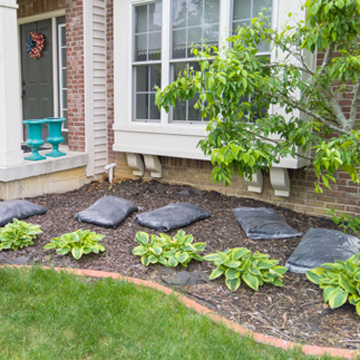 to mulch or not to mulch