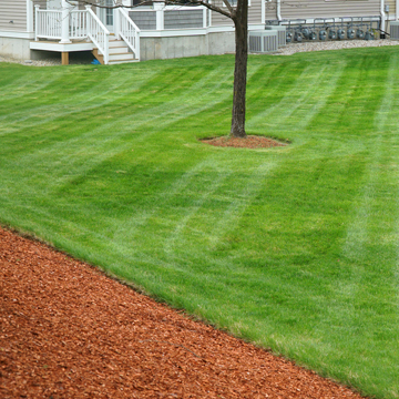 topdressing to help lawn