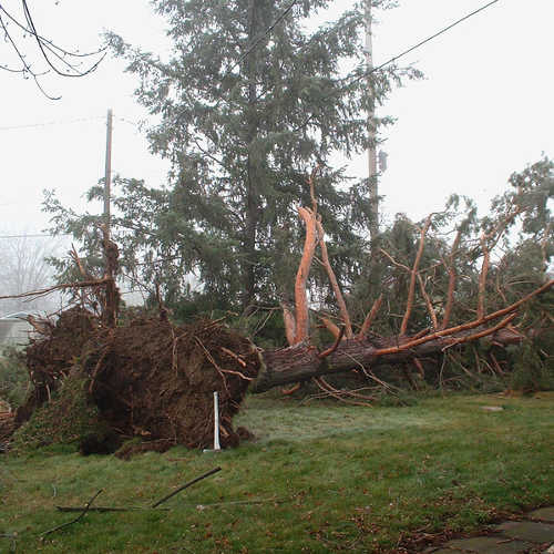 Storm Damage Emergency Clean Up In Kingsport