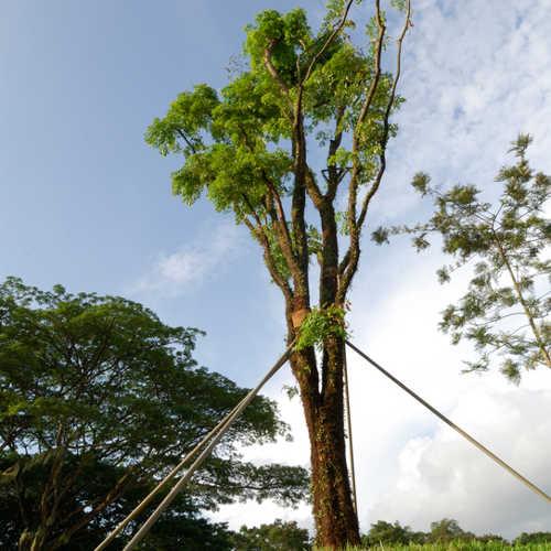 trees cables braces