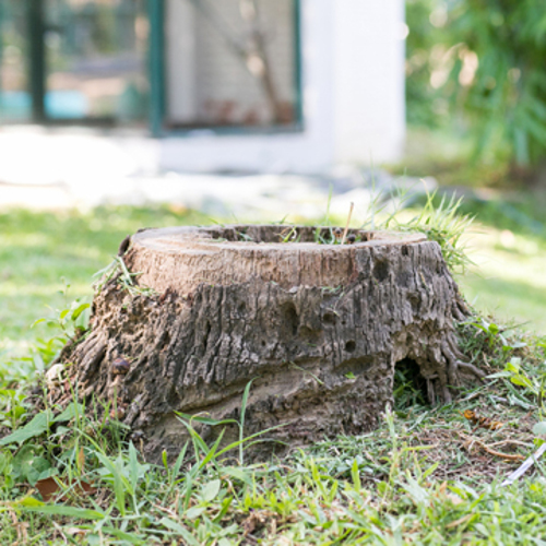 why tree stumps need to be removed