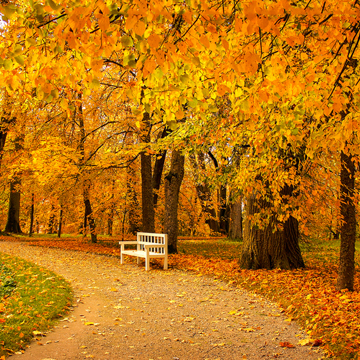 caring for trees in fall