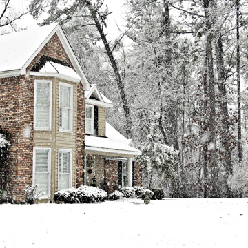 protecting your trees this winter