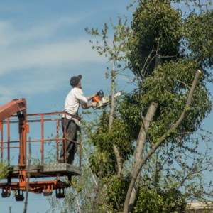 leave tree removal to professionals