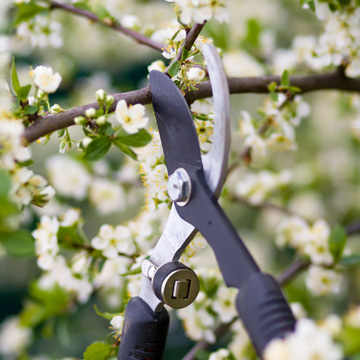 pruning trees this spring