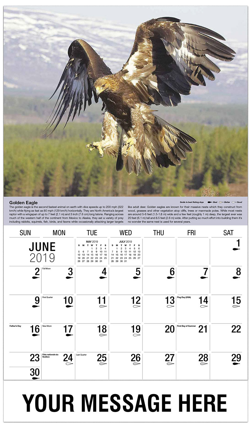 Largest Eagle Ever Earth
