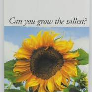 Stock Packet – Sunflower