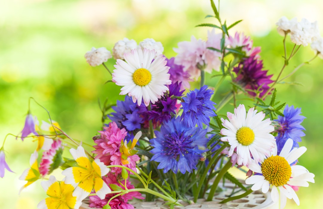 Bright summer flowers mix_LIB_shutterstock_SM