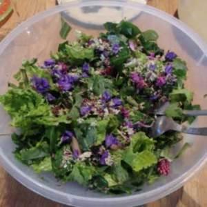 Plantes alimentaires et salades