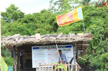 sri lanka tour itinerary - Madu River Boat Ride through Mangroves - View 13 - Fish Spa
